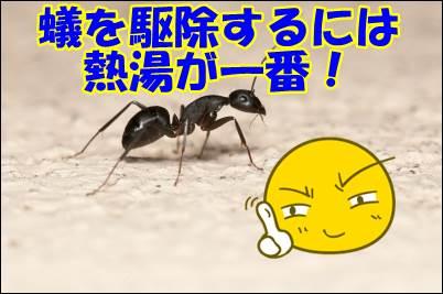 最強の蟻対策は熱湯!でも巣には効かない可能性もある理由とは?