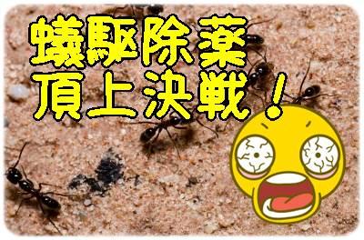 アリの巣コロリとコンバットアリ用とアリメツの効果を比較してみた