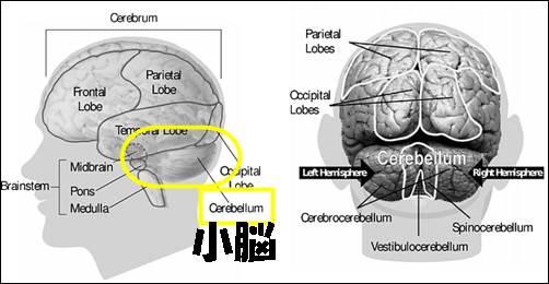 脳の解剖1