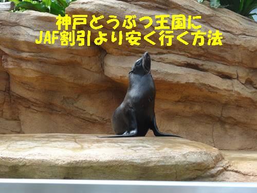 神戸どうぶつ王国にJAF割引クーポンより安く最安で行く方法は?