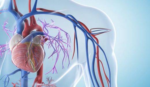 上肢の血管を解剖図で詳しくご紹介!どんな動脈や静脈があるの?
