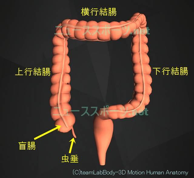 盲腸の痛みの場所を図や画像で解説!左じゃなくて右下腹部です5